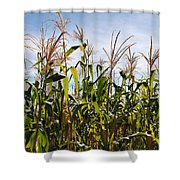 Corn Production Shower Curtain by Carlos Caetano