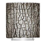 Cottonwood Bark 1 Shower Curtain by Marilyn Hunt