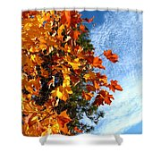 Country Color 30 Shower Curtain by Will Borden