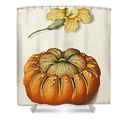 Courgette And A Pumpkin Shower Curtain by Joseph Jacob Plenck
