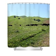 Cows Along The Rolling Hills Landscape of The Black Diamond Mines in Antioch California 5D22346 Shower Curtain by Wingsdomain Art and Photography