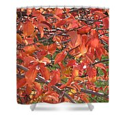 Crabapple Shower Curtain by Kimberly Maxwell Grantier