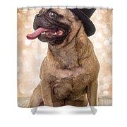 Crazy Top Dog Shower Curtain by Edward Fielding