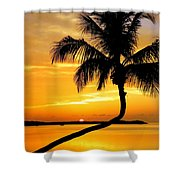 Crooked Palm Shower Curtain by Karen Wiles