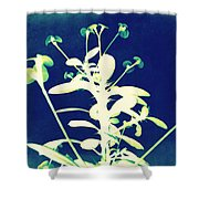 Crown Of Thorns - Blue Shower Curtain by Shawna Rowe