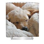 Cuddling Labrador Retriever Puppy Shower Curtain by Jennie Marie Schell