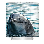 Curious Dolphin Shower Curtain by Mariola Bitner