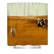 Curious Ponys  Shower Curtain by Jeff Swan