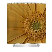 Curly Mum Shower Curtain by Susan Candelario