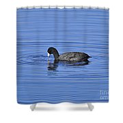 Cute Coot Shower Curtain by Al Powell Photography USA