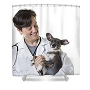 Cute Little Puppy With Vet Shower Curtain by Edward Fielding
