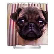 Cute Pug Puppy Shower Curtain by Edward Fielding