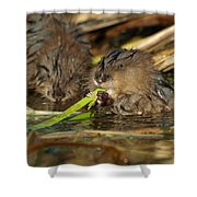 Cutest Water Rats Shower Curtain by James Peterson