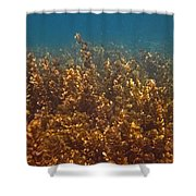 Cyril Shower Curtain by Pete Marchetto