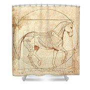 da Vinci Horse in Piaffe Shower Curtain by Catherine Twomey
