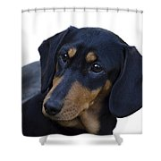 Dachshund Shower Curtain by Linsey Williams