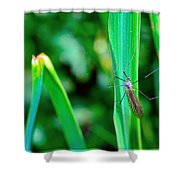 Daddy Long Legs  Shower Curtain by Toppart Sweden