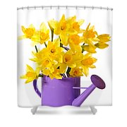 Daffodil Display Shower Curtain by Amanda And Christopher Elwell