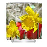 Daffodil Flowers Art Prints Spring Daffodils Red Tulip Garden Shower Curtain by Baslee Troutman