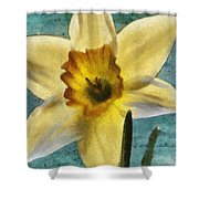 Daffodil Shower Curtain by Jeff Kolker