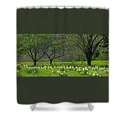 Daffodil Meadow Shower Curtain by Ann Horn