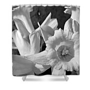 Daffodil Monochrome Study Shower Curtain by Chris Berry