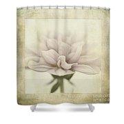Dahlietta Textures Shower Curtain by John Edwards
