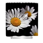 Daisies Shower Curtain by Rona Black