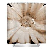 Daisy Dream Raindrops Sepia Shower Curtain by Jennie Marie Schell