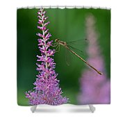 Damselfly Shower Curtain by Juergen Roth