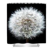 Dandelion Life Cycle Shower Curtain by Steve Gadomski