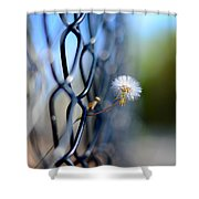 Dandelion Wish Shower Curtain by Laura Fasulo