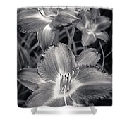Day Lilies In Black And White Shower Curtain by Adam Romanowicz