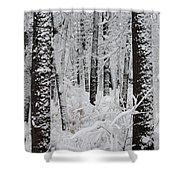 Deep Snow In The Forest Shower Curtain by Lynn-Marie Gildersleeve