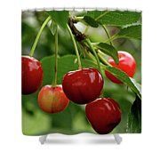 Delicious Cherries Shower Curtain by Sandy Keeton