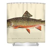 Denton Brook Trout Shower Curtain by Gary Grayson