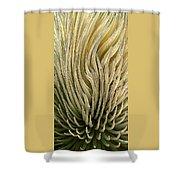Desert Green Shower Curtain by Ben and Raisa Gertsberg