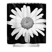Dew Drop Daisy Shower Curtain by Adam Romanowicz