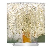 Dew Drops On Dandelion Shower Curtain by Peggy Collins