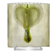 Dicentra Spectabilis Alba Shower Curtain by John Edwards