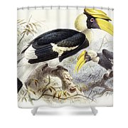 Dichocerus Bicornis Shower Curtain by Johan Gerard Keulemans