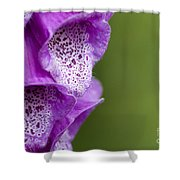 Digitalis Abstract Shower Curtain by Anne Gilbert