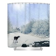 Dog Looking Back Shower Curtain by Amanda Elwell