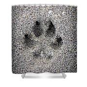 Dog paw print in sand Shower Curtain by Elena Elisseeva