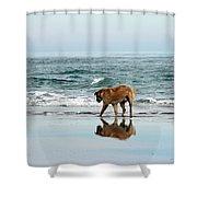 Dog Walking Shower Curtain by Cynthia Guinn