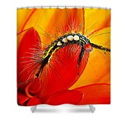 Don't Touch Shower Curtain by Bill Caldwell -        ABeautifulSky Photography