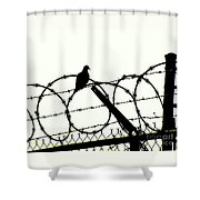 Dove Mourning Shower Curtain by Joe Jake Pratt