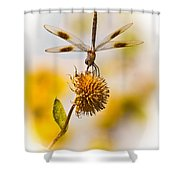 Dragonfly On Dead Bud Shower Curtain by Robert Frederick