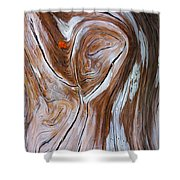 Driftwood 6 Shower Curtain by Bill Caldwell -        ABeautifulSky Photography