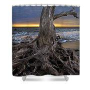 Driftwood On Jekyll Island Shower Curtain by Debra and Dave Vanderlaan